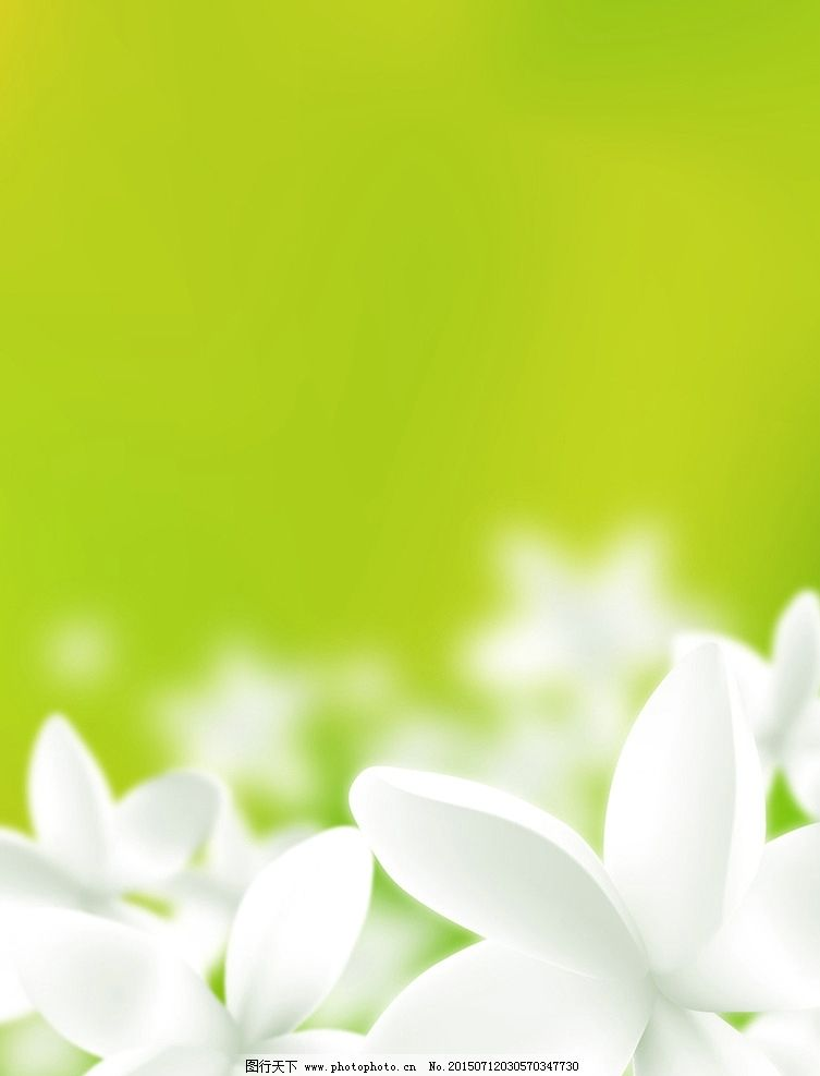 白色 花 绿色 背景 百合 清新 植物 春天 外景 景色 设计 底纹边框