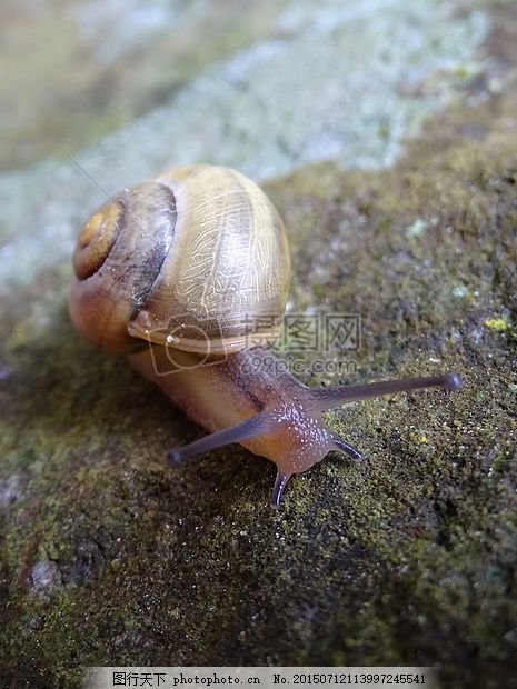 蜗牛 岩壳 动物 石 红色