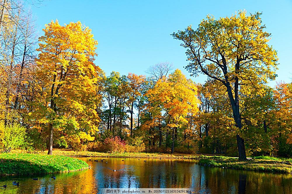 秋天湖泊树林风景 秋天树林风景 树木风景 秋季风景 秋天风景 美丽