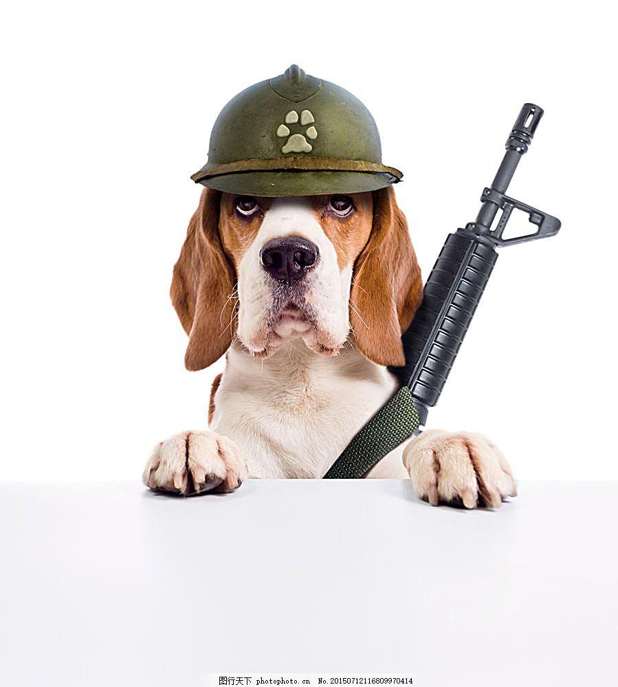 拿着武器的狗 拿着武器的狗图片素材 拿着武器的狗图片下载 广告牌