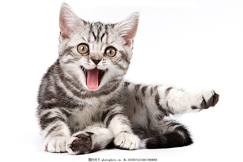猫咪 小猫 宠物猫 可爱动物 动物世界 陆地动物 生物世界 图片素材