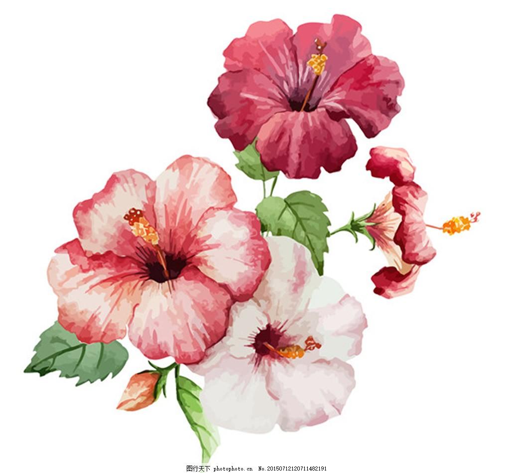 美丽水彩扶桑花 花卉 扶桑花 热带花卉 朱槿花 植物 水彩画 矢量素材