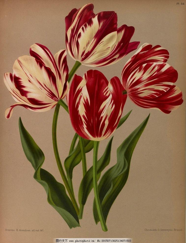 手绘花朵 花纹素材 生物世界 花草 redoute 设计 植物园 复古手绘花卉