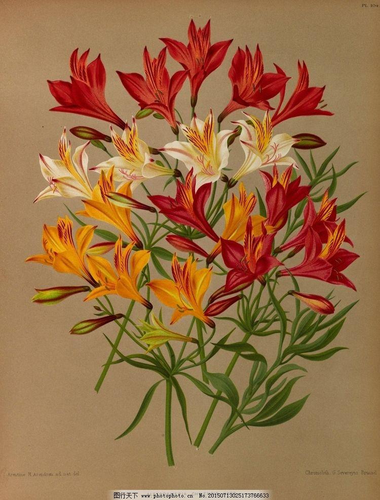 复古手绘一束百合花图片