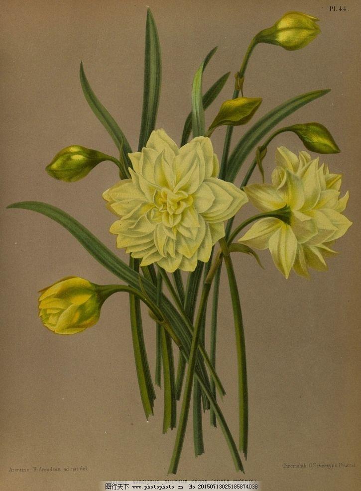 复古手绘 郁金香 植物图 插画 百合花 风信子 兰花 水仙花 最美丽的花