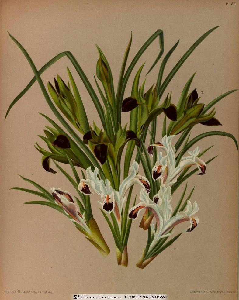 复古手绘一束鸢尾花 郁金香 植物图 插画 百合花 风信子 兰花