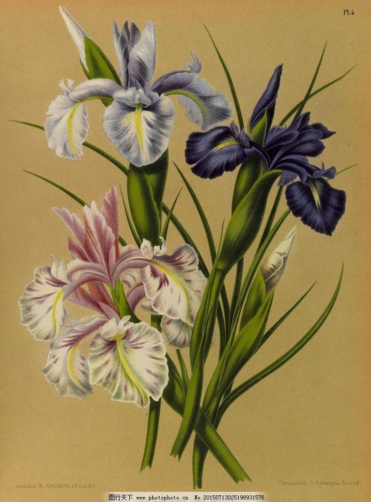 蝴蝶 鲜花 手绘花纹 精美花纹 兰花贴图 简洁 移门设计 彩色花朵 手绘