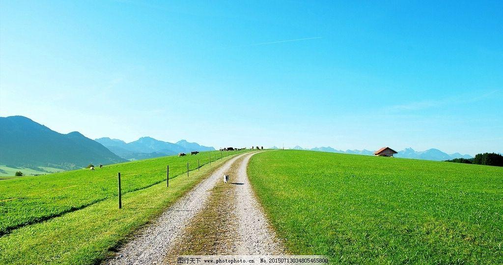 大草原小路 草坪 乡间小路 乡村 摄影