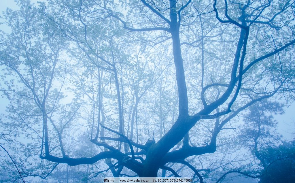 幽蓝迷雾图片_自然风景_自然景观_图行天下图库