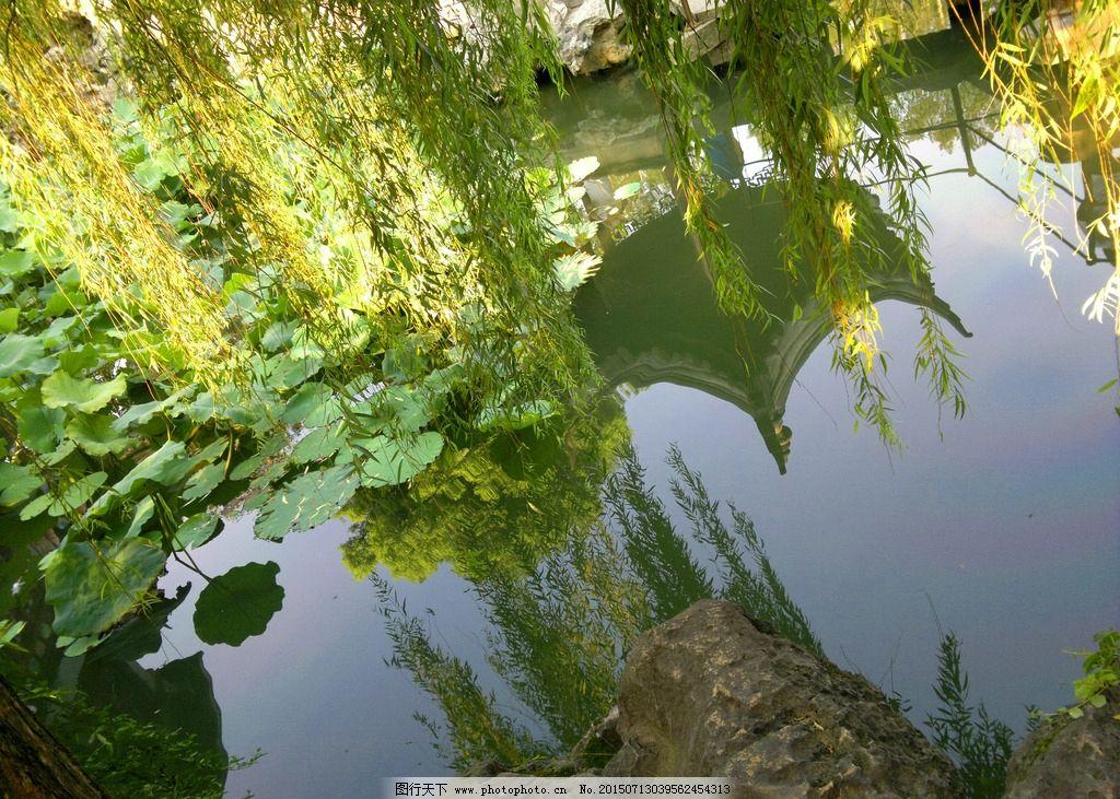 池塘 湖边 柳树 江南园林 苏州园林 荷塘 春色 摄影自然风光 摄影