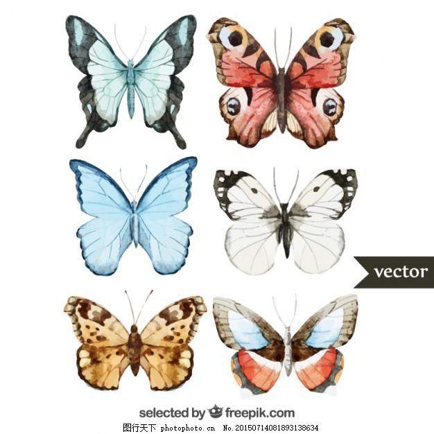 手绘蝴蝶 摘要 水彩画 自然 动物 绘画 色彩 昆虫 艺术 白色