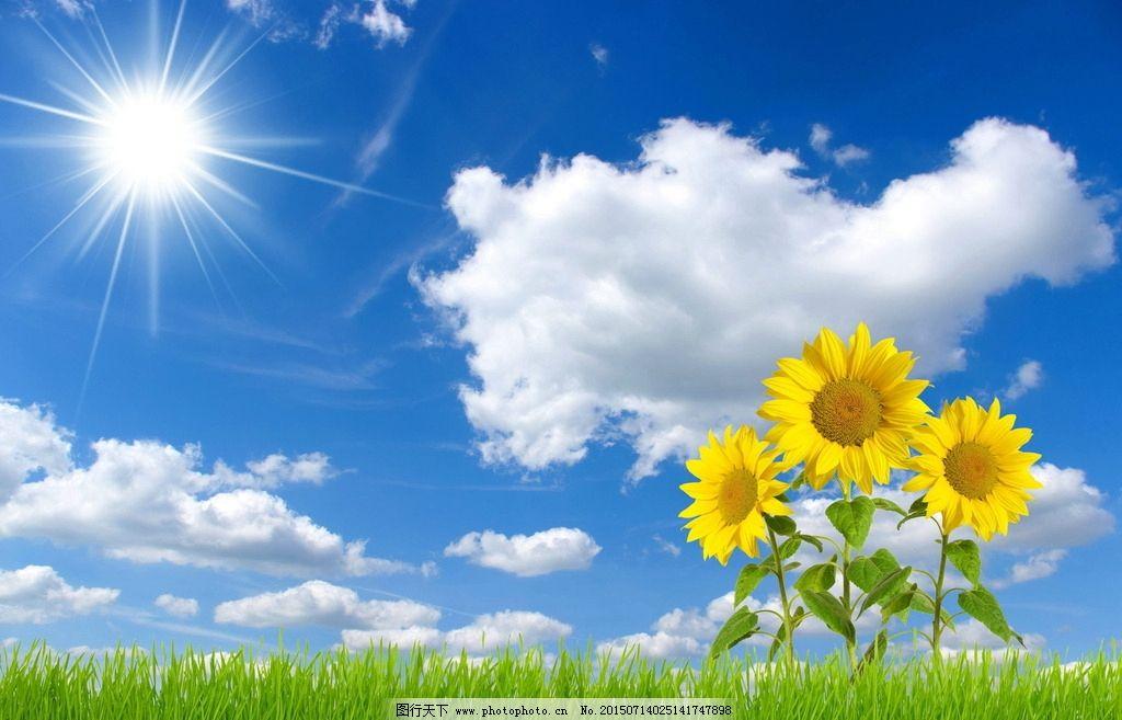 向阳花图片图片