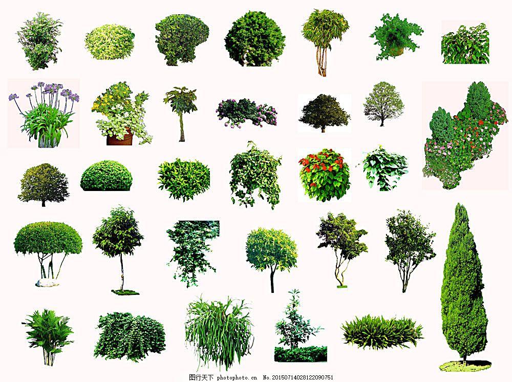 树木 常绿乔木 园林装饰树木 景观 松树 柳树 桂花树 榕树 园林装饰