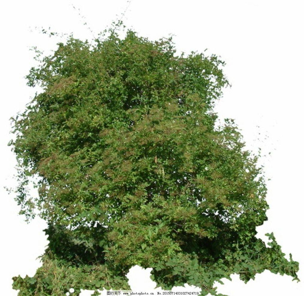 灌木矮树丛带通道tiff图图片