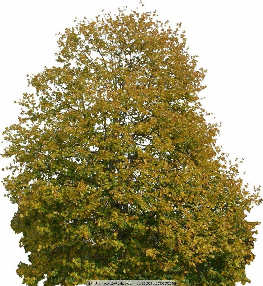 秋季树木带通道TIFF图 秋天树木 绿色植物 商业素材 后 花草树木