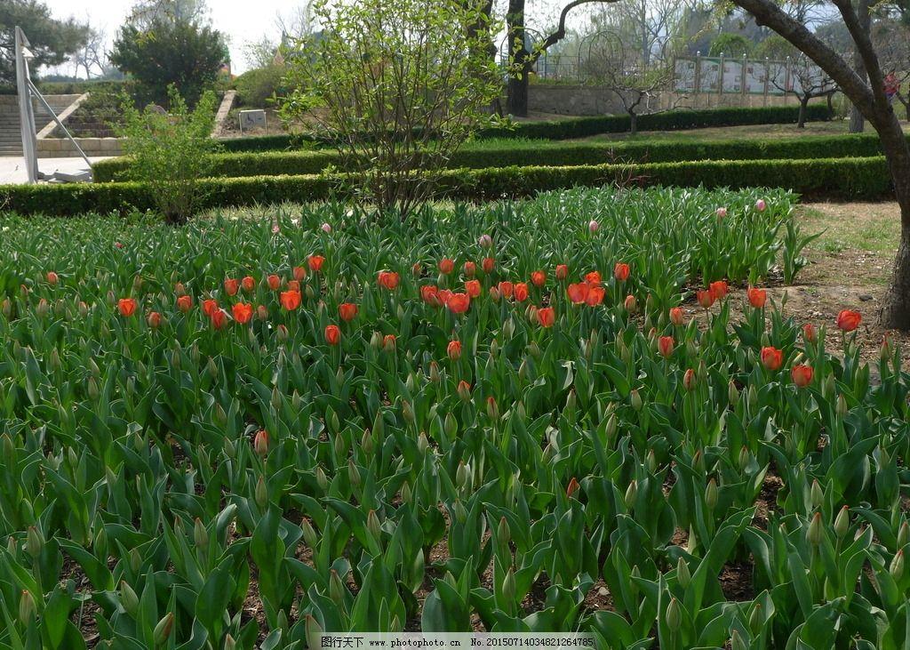 北京 植物园图片