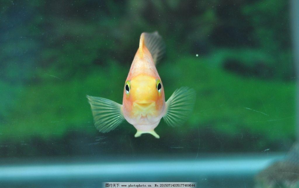 鱼 鱼类 桌面