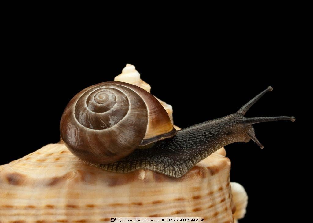 蜗牛 小蜗牛 蜗壳 蜗牛壳 外壳 软体动物 爬行动物 昆虫 动物 生物