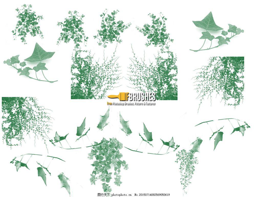 常青藤植物叶子,藤蔓ps笔刷下载