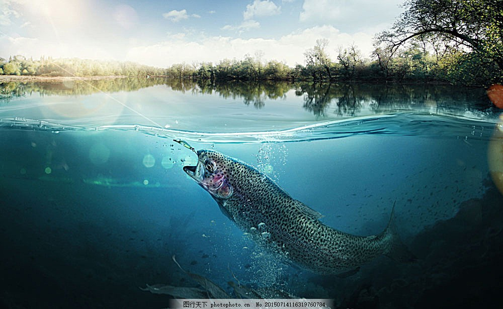 海底里的鱼 海洋 树木动物 野生动物 动物世界 动物摄影 陆地动物