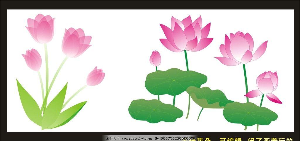 手绘荷花 花朵图片