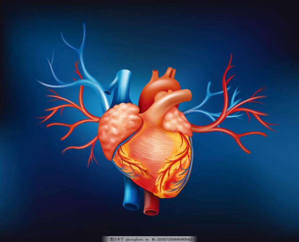 人体心脏器官设计矢量素材 人体器官 结构图 名称 黑色