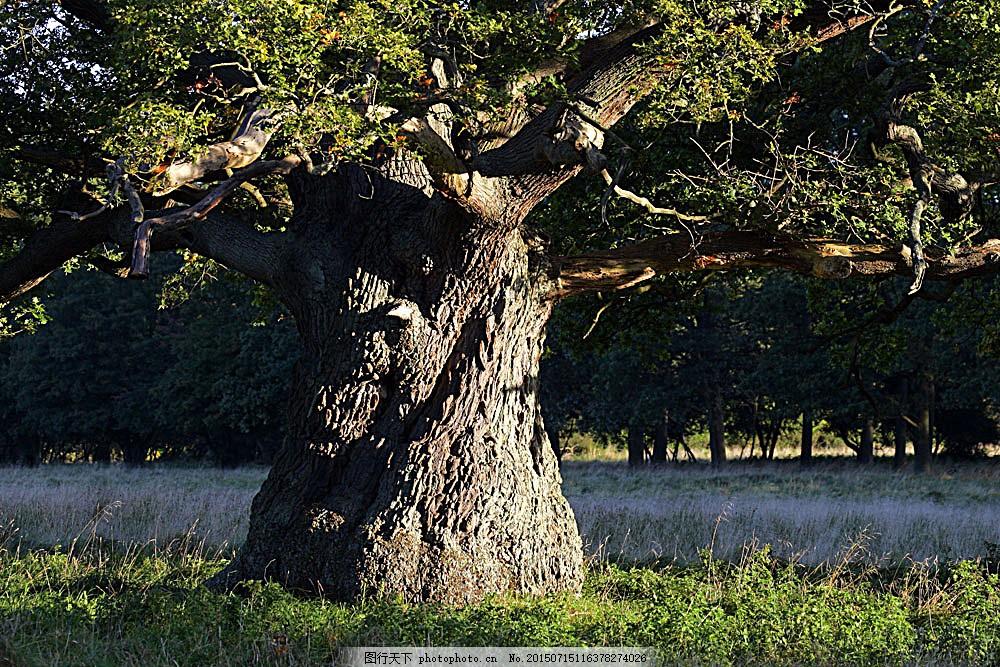 风景 植物 大树 参天大树 树根 草地 生机 活力 自然风景 自然景观