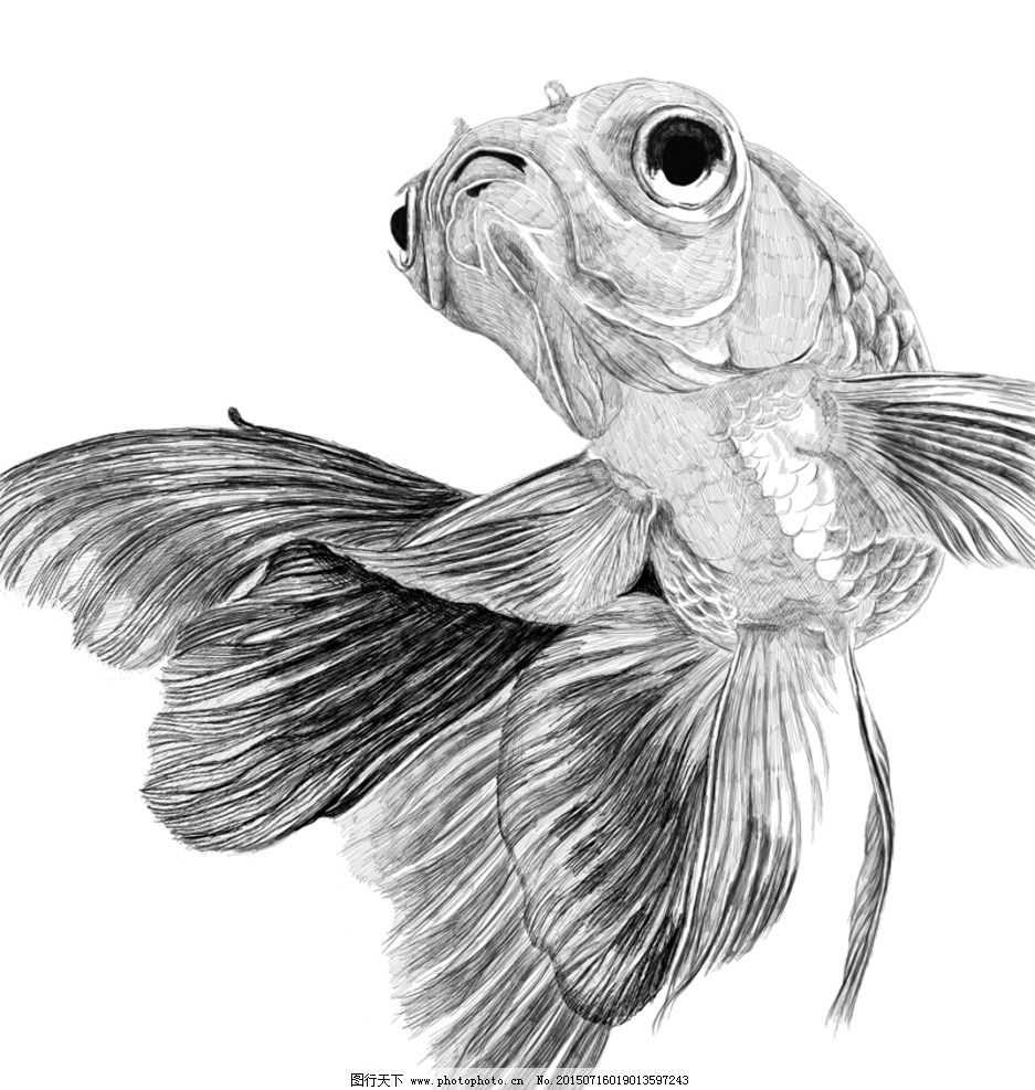 金鱼素描画步骤