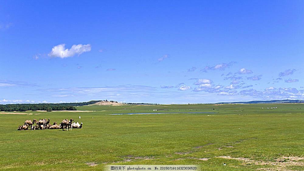 草原上的动物风景