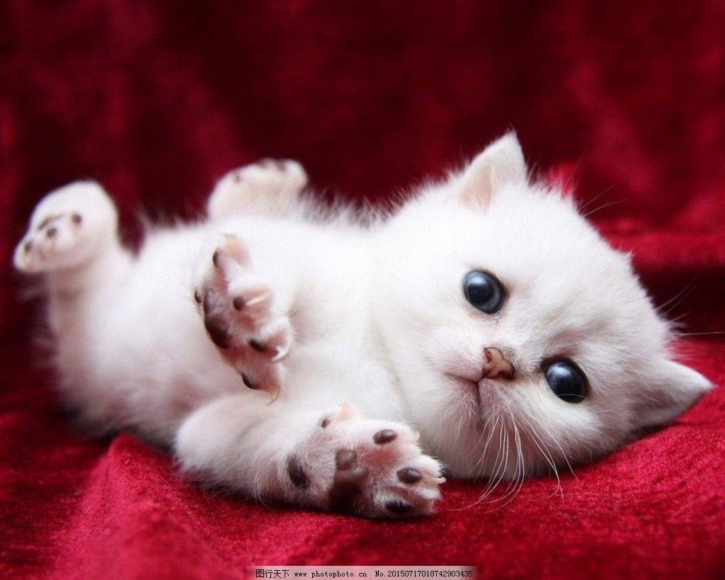 壁纸免费下载 可爱 猫咪 萌宠 迷你 可爱 萌宠 猫咪 迷你 图片素材