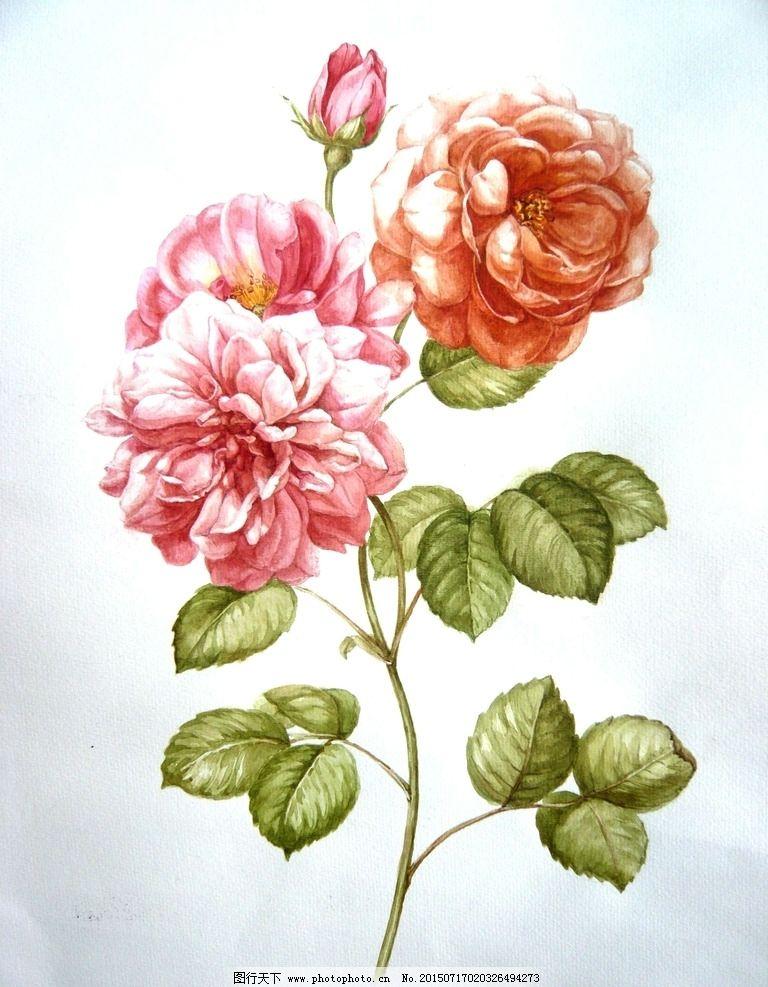 手绘玫瑰图片_花边花纹