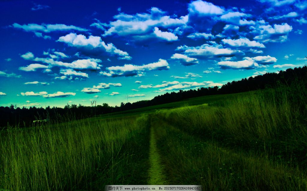 蓝天绿树森林风景图片