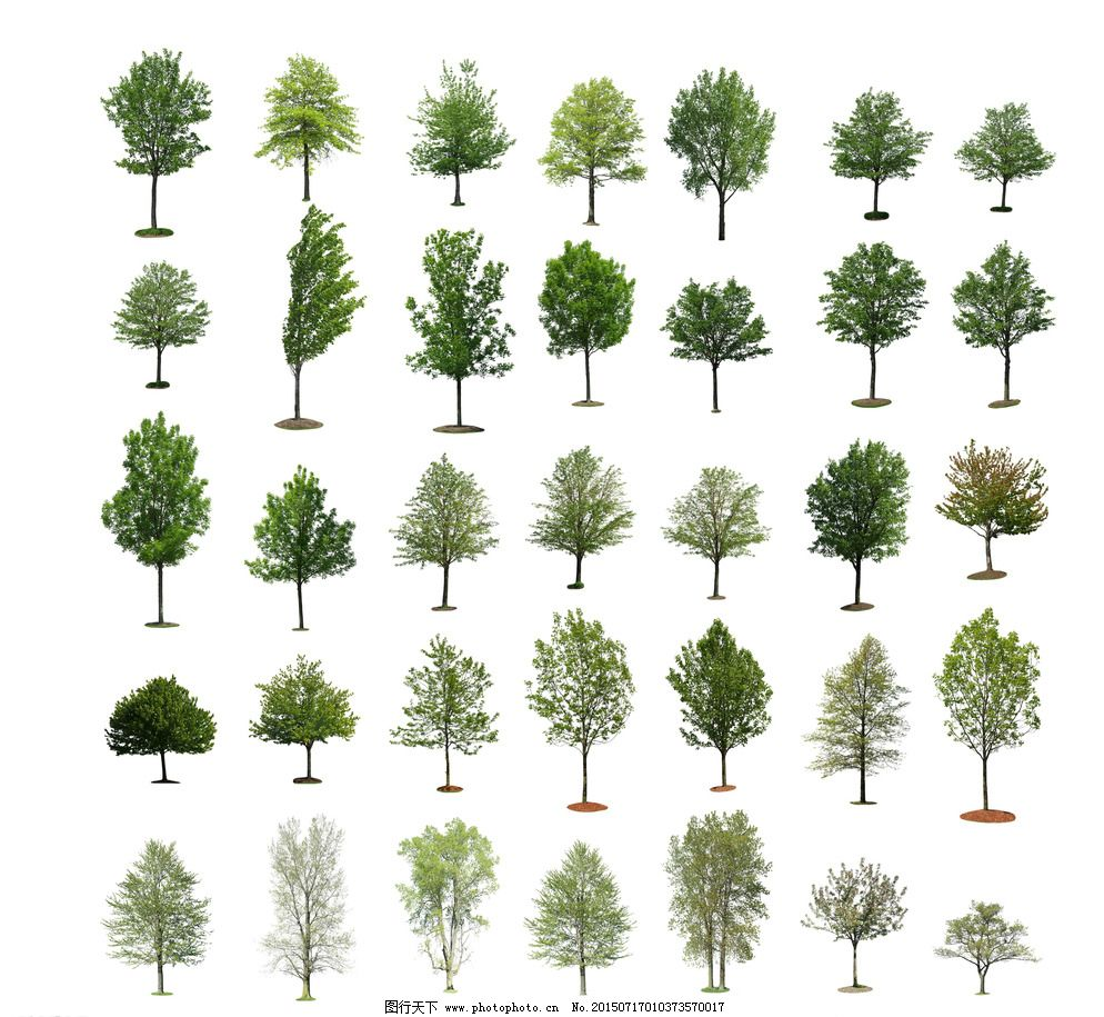 景观立面树图片免费下载