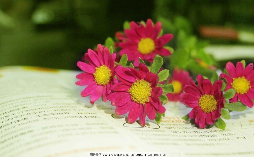 小雏菊 唯美图片