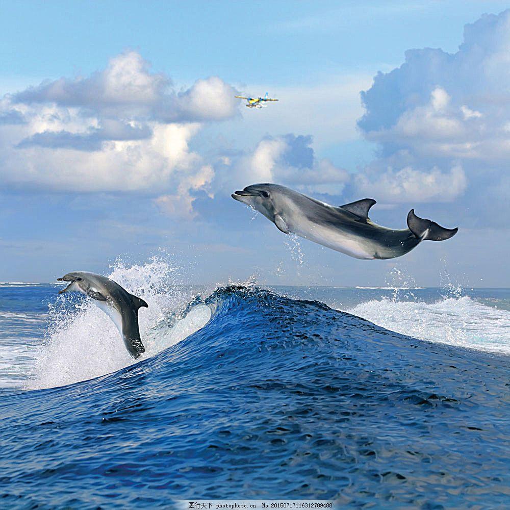 壁纸 动物 海洋动物 桌面 1000_1000