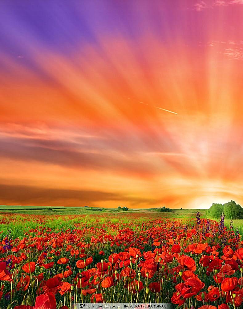 黄昏时的鲜花 美丽花朵 美丽鲜花 花卉 美丽风景 风景摄影 自然景观