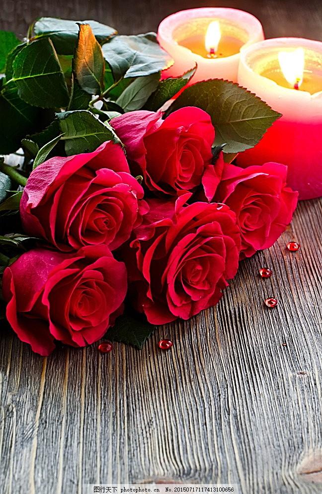 香槟玫瑰唯美图片_红玫瑰-红玫瑰歌词是什么意思_红玫瑰花语是什么意思_购玫瑰花