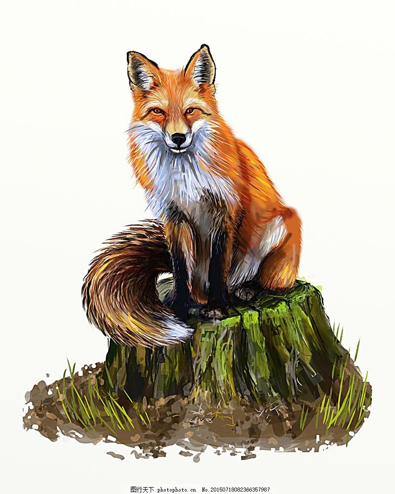 狐狸插画 动物插画 矢量动物 水彩画 水彩动物 陆地动物 生物世界