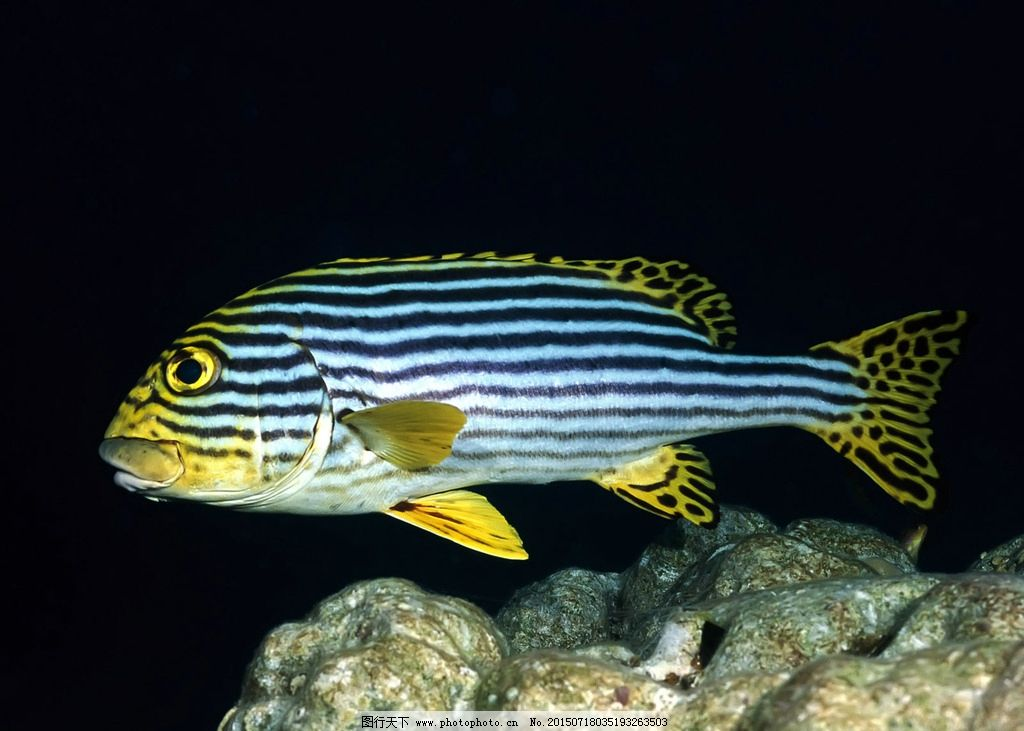 海底世界 海底 海底素材 海底生物 海洋生物 鱼 珊瑚 鱼群 海洋 生物