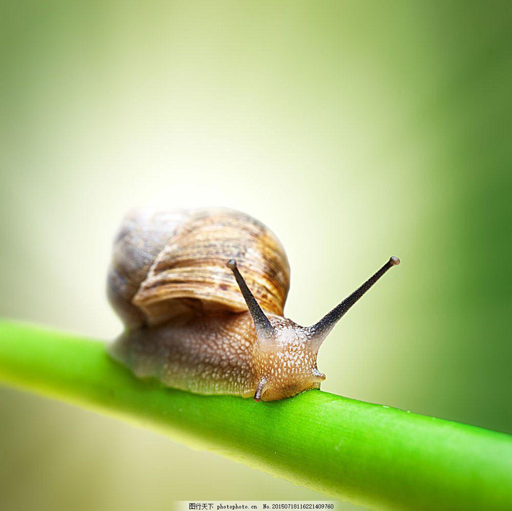 树枝上的蜗牛摄影 动物 野生动物 动物世界 昆虫世界 生物世界