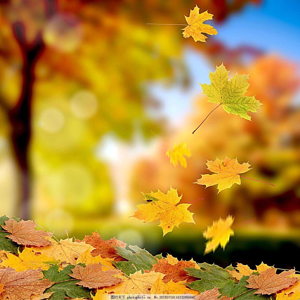 秋天落叶风景图片