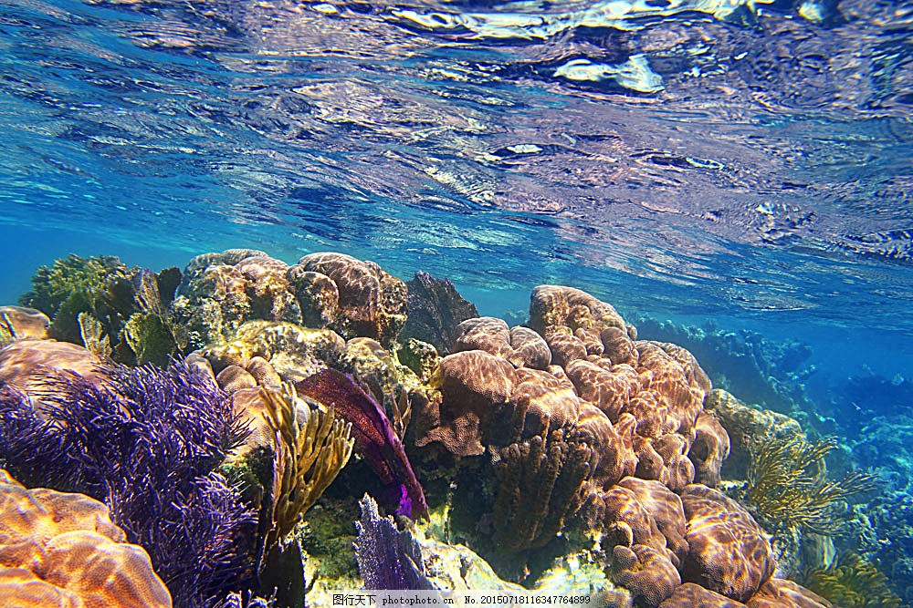 海底海藻生物 海底世界 珊瑚 海水 海底生物 海藻 海洋生物 自然风景