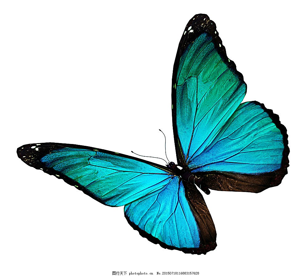 蓝色蝴蝶 美丽蝴蝶 蝴蝶标本 动物标本 动物世界 昆虫世界 生物世界