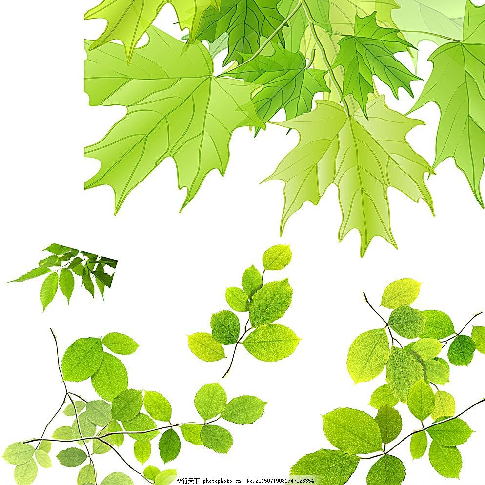 树木树叶 各种树叶 叶子 绿色叶子 枫叶 枫叶素材 树枝 花纹花边 一串