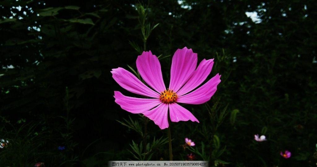 粉红色小花图片