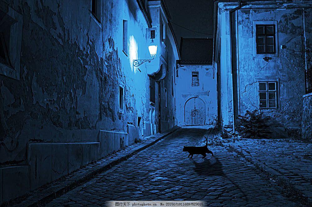 夜晚的黑猫咪 小猫 黑猫 猫咪 萌宠 宠物猫 动物世界 可爱动物 陆地