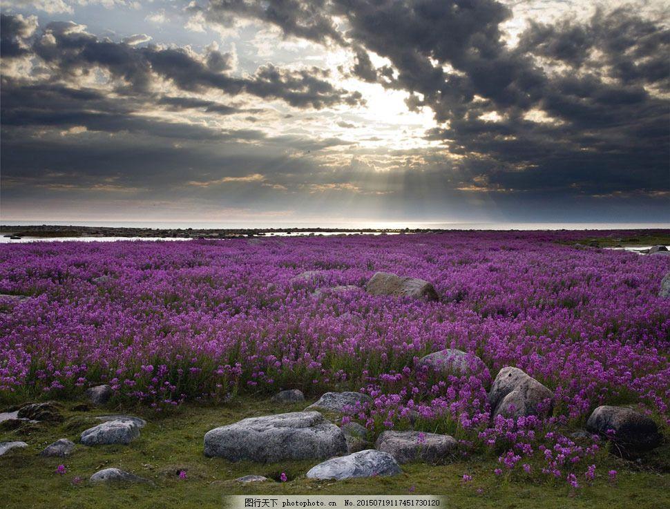 天空云彩下的花海影楼摄影背景 影楼素材 影楼背景 喷绘背景 高清背景图片