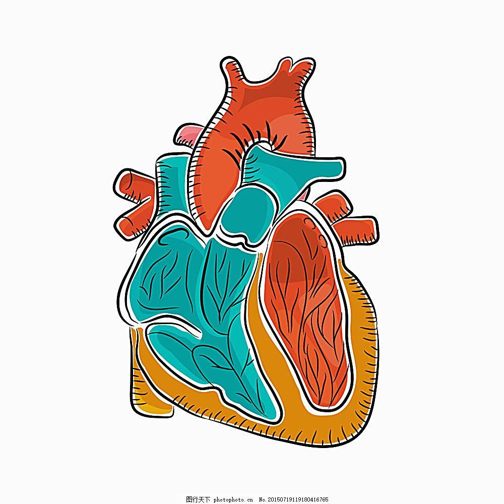 彩色心脏解析图 卡通 器官 医疗 科学研究 现代科技 办公学习图片