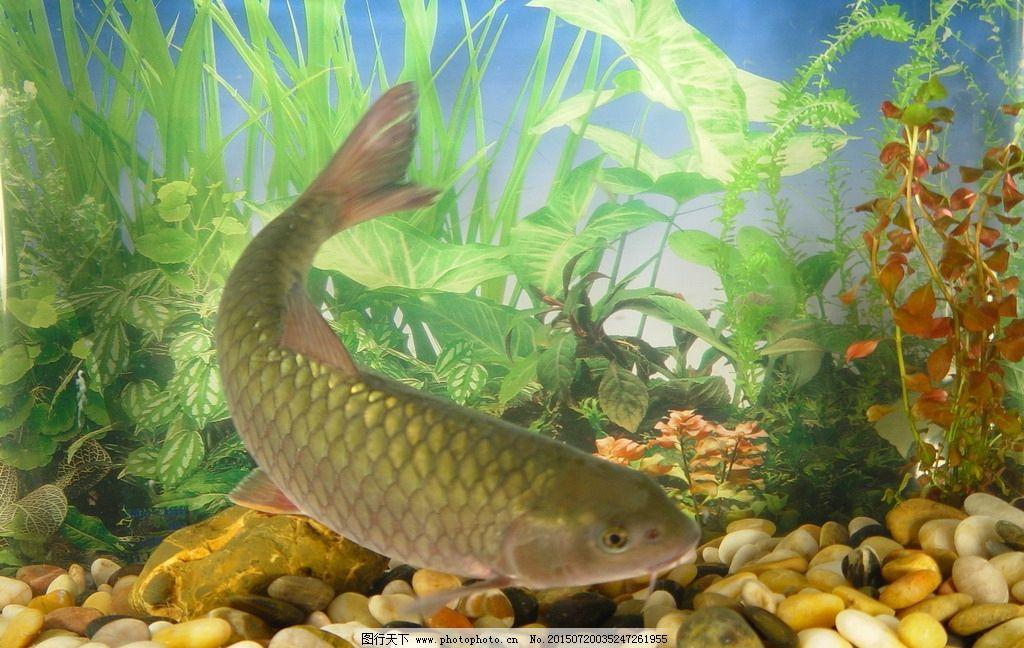 小型鱼缸适合养什么鱼_桌面小鱼缸适合养什么鱼-小鱼缸适合养什么鱼?养几条鱼比较好?