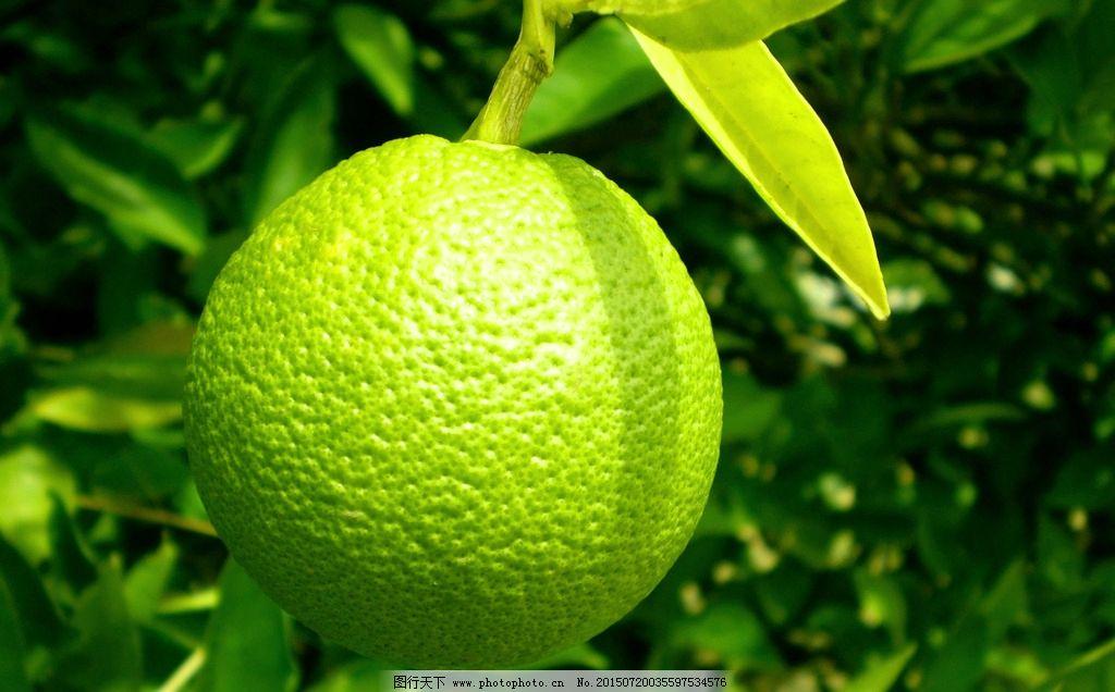 青橘子图片